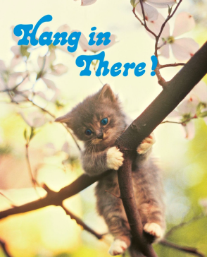 hangintherecat